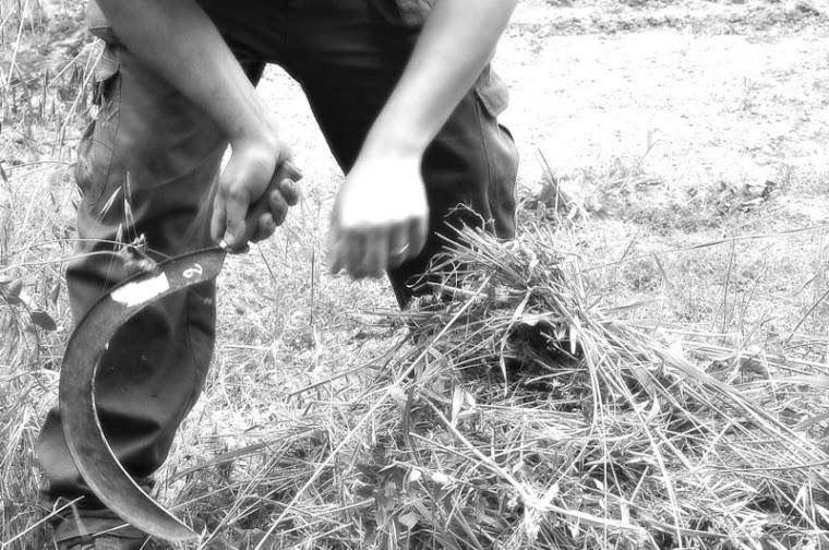 Taglio dell'erba per gli animali del podere