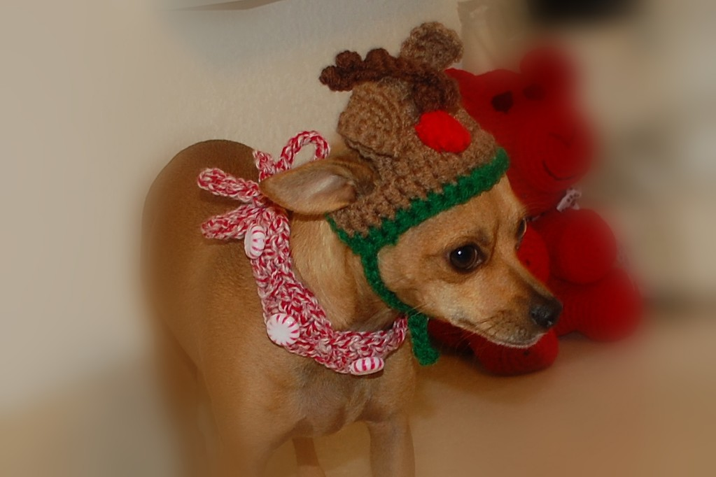Free Crochet Pattern For Dog Harness : Posh Pooch Designs Dog Clothes: Peppermint Christmas Dog ...
