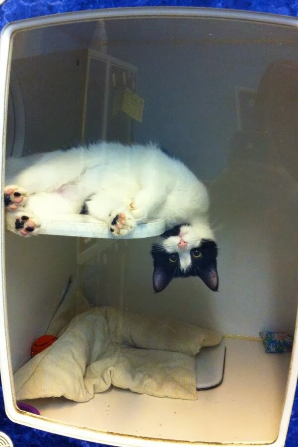 Funny cats - part 85 (40 pics + 10 gifs), cat in kennel looking adorable