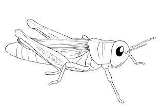 How To Draw A Grasshopper Draw Central