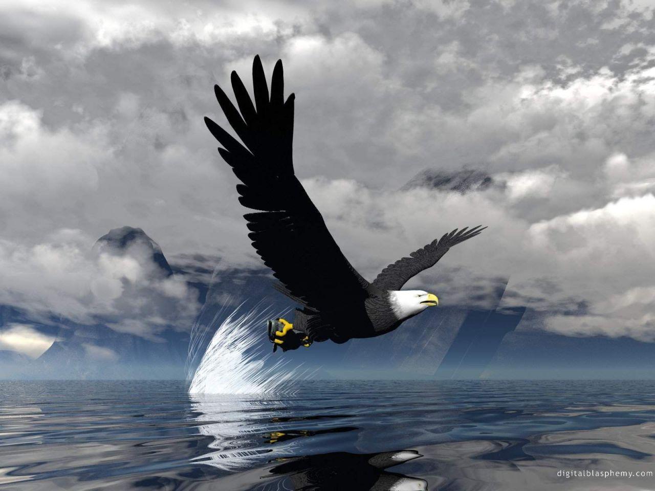 065aac9dbc Que voa no céu tão azul. Abro minha asas. Olho em volta. De norte a sul.  Olho ao longe te vejo caça. Afio as garras ... Num mergulho afiado. Como ...