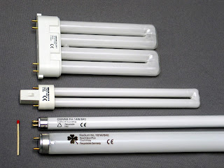 the fluorescent lamps