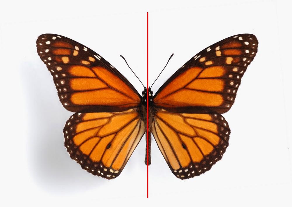Transformaciones isom tricas simetr a y reflexi n for Espejo que no invierte la imagen