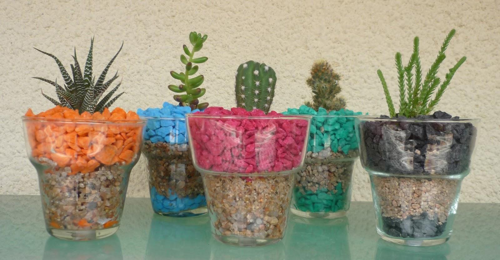 Happy plants cactus crasas en macetas de vidrio - Cactus en macetas pequenas ...