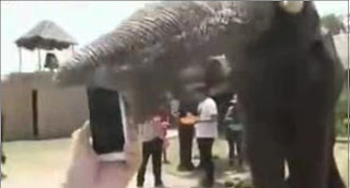 Elefante cominedose un iphone