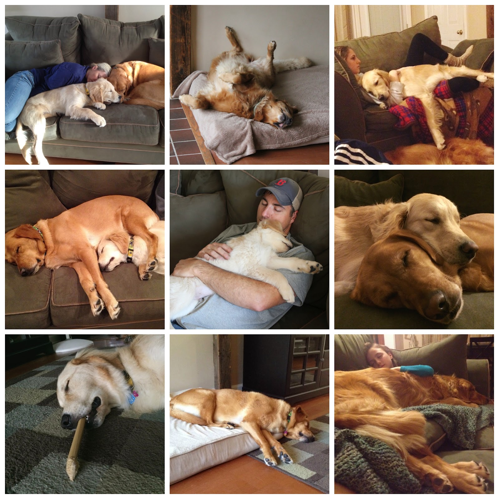 dogs and family napping together