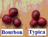 咖啡Bourbon