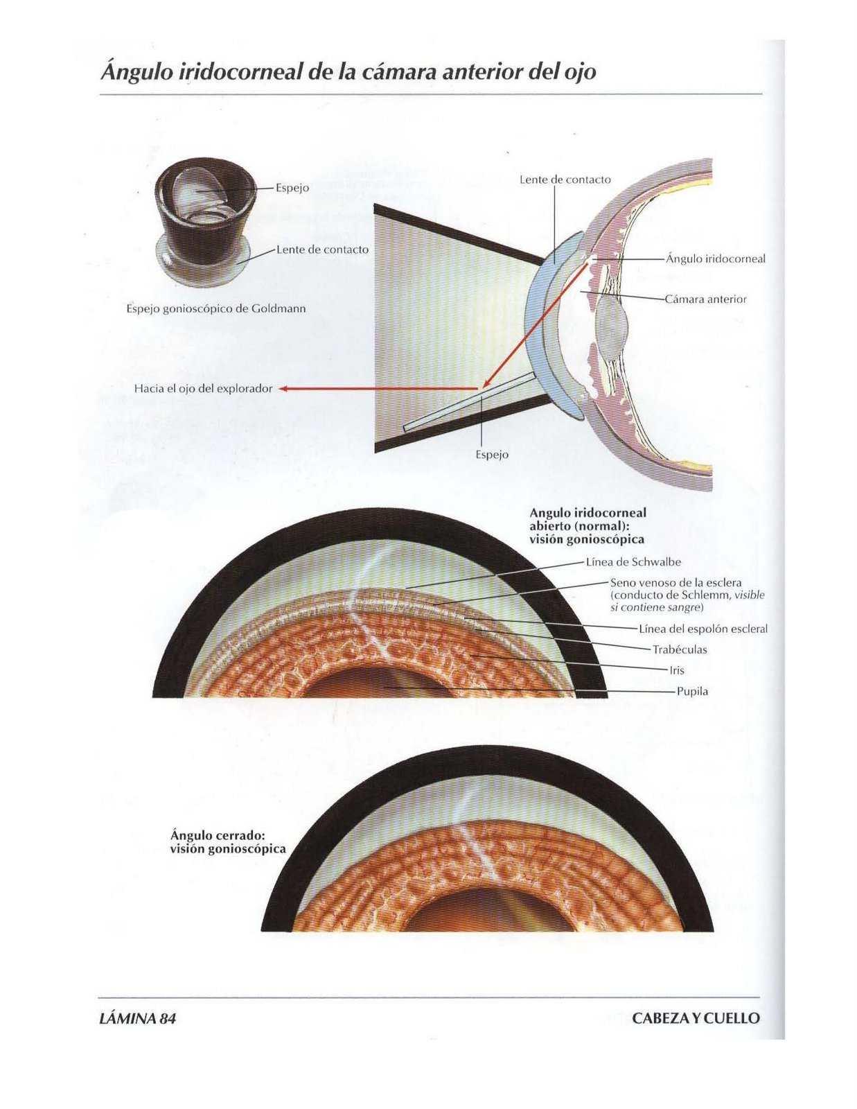 Atlas, anatomía: Ángulo iridocorneal de la cámara anterior del ojo ...