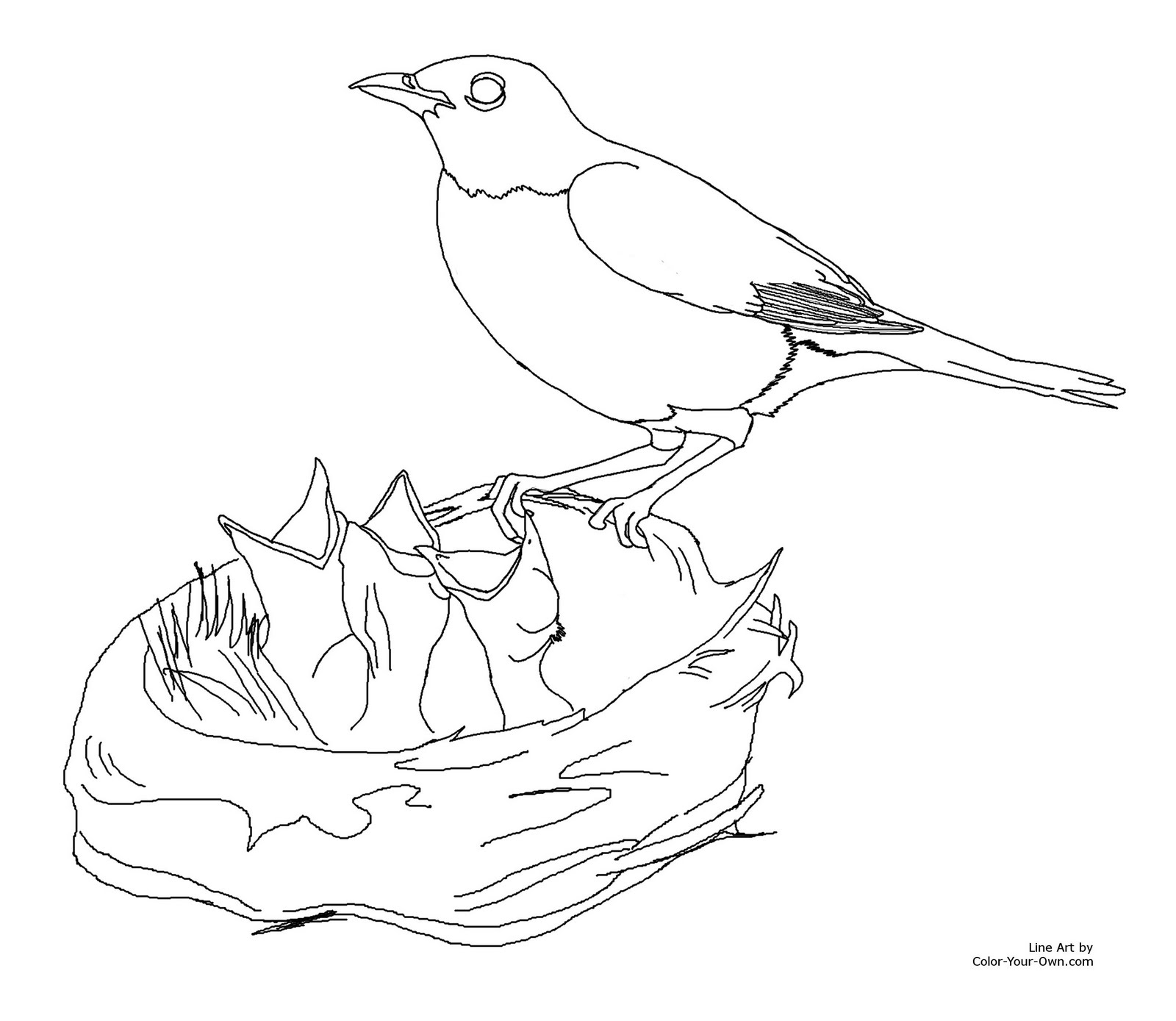 Drawing printout how to draw a bird nest - Baby Birds In Nest Drawing Photo 7