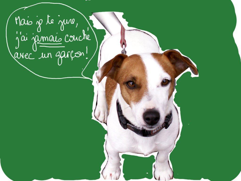 anniversaire chien jack russel