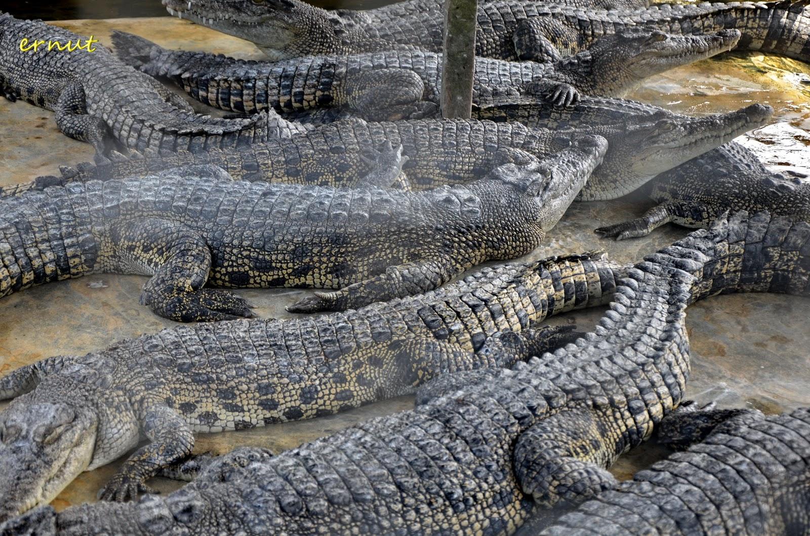 Kepopuleran Pariwisata di Balikapapan