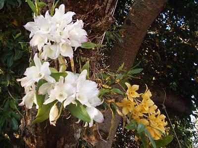 Orquídeas Silvestres