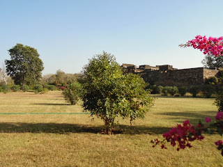garden in fort area