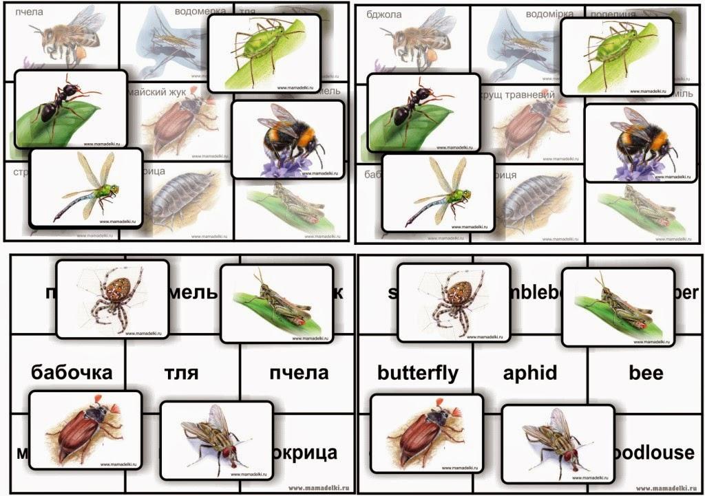 насекомые и их знакомые выпуск 2015
