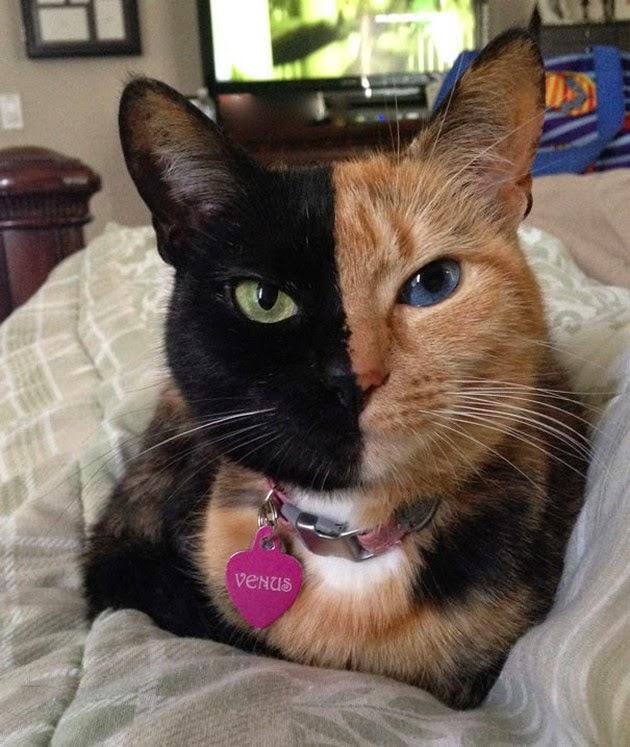 weird-cat-2
