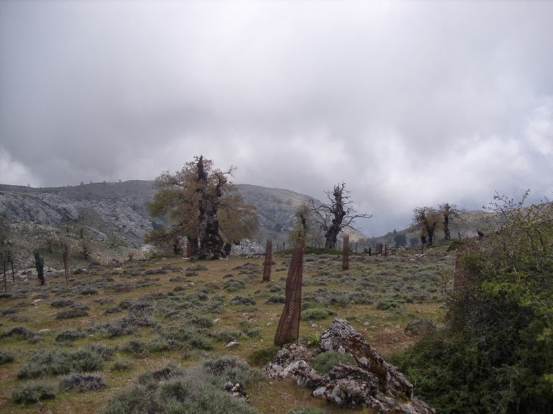 Excursión a la Sierra de las Nieves, SEO-Sevilla
