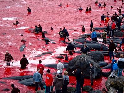 بالصوراكبربحر الدماء بالعالم