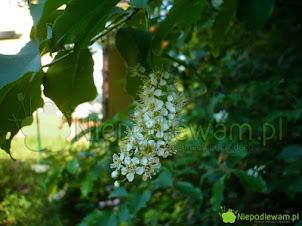 Pachnący ogród – kwiaty o najmocniejszym zapachu
