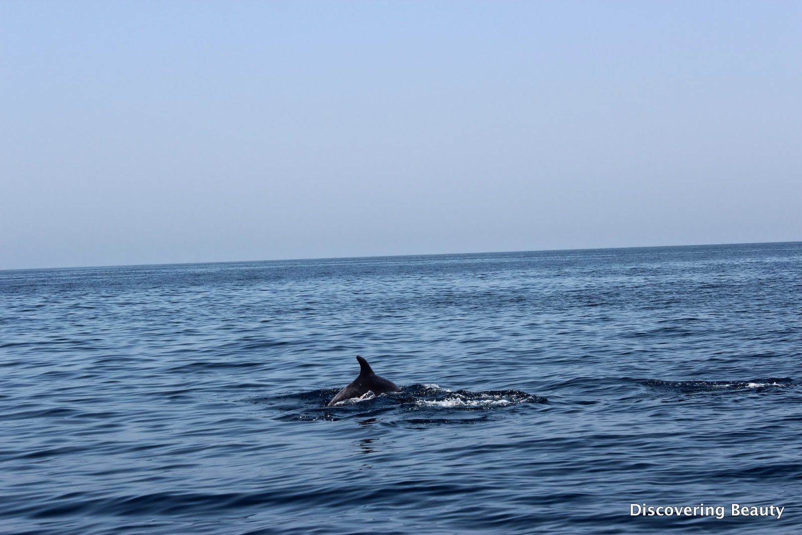 Dolphin watching Oman