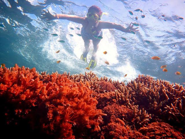 foto snorkeling di kepulauan derawan