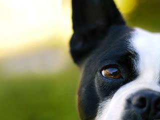 Los perros pueden ver colores
