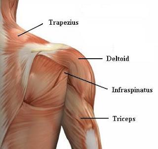 Sindrom bahu-tangan adalah salah satu jenispenyakit reflek otot