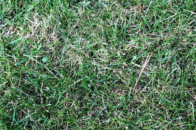 nawóz jesienny, jak nawozić trawnik