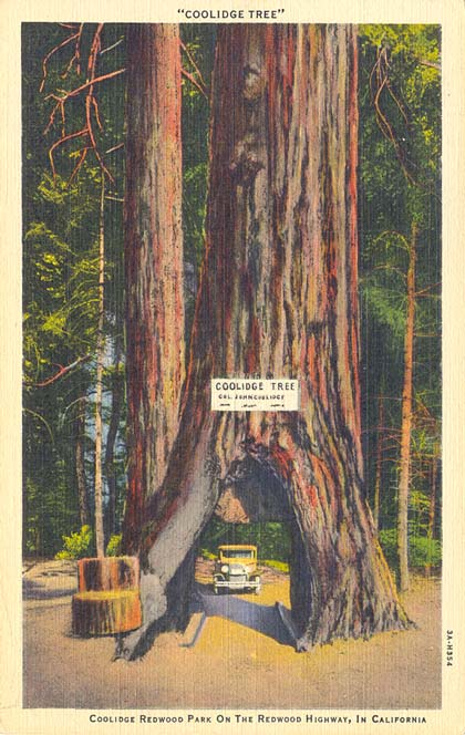 POSTCARDY: the postcard explorer: California Drive-Thru Trees