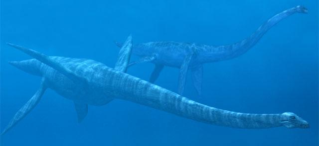 Mauisaurus Penyu Cangkang