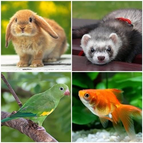coelho, furão, periquito, peixe