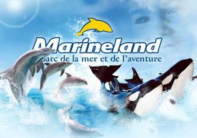 Promo Marineland Antibes: le billet adulte à 30€ au lieu de 38€ bon plan marineland idee sortie parc attraction