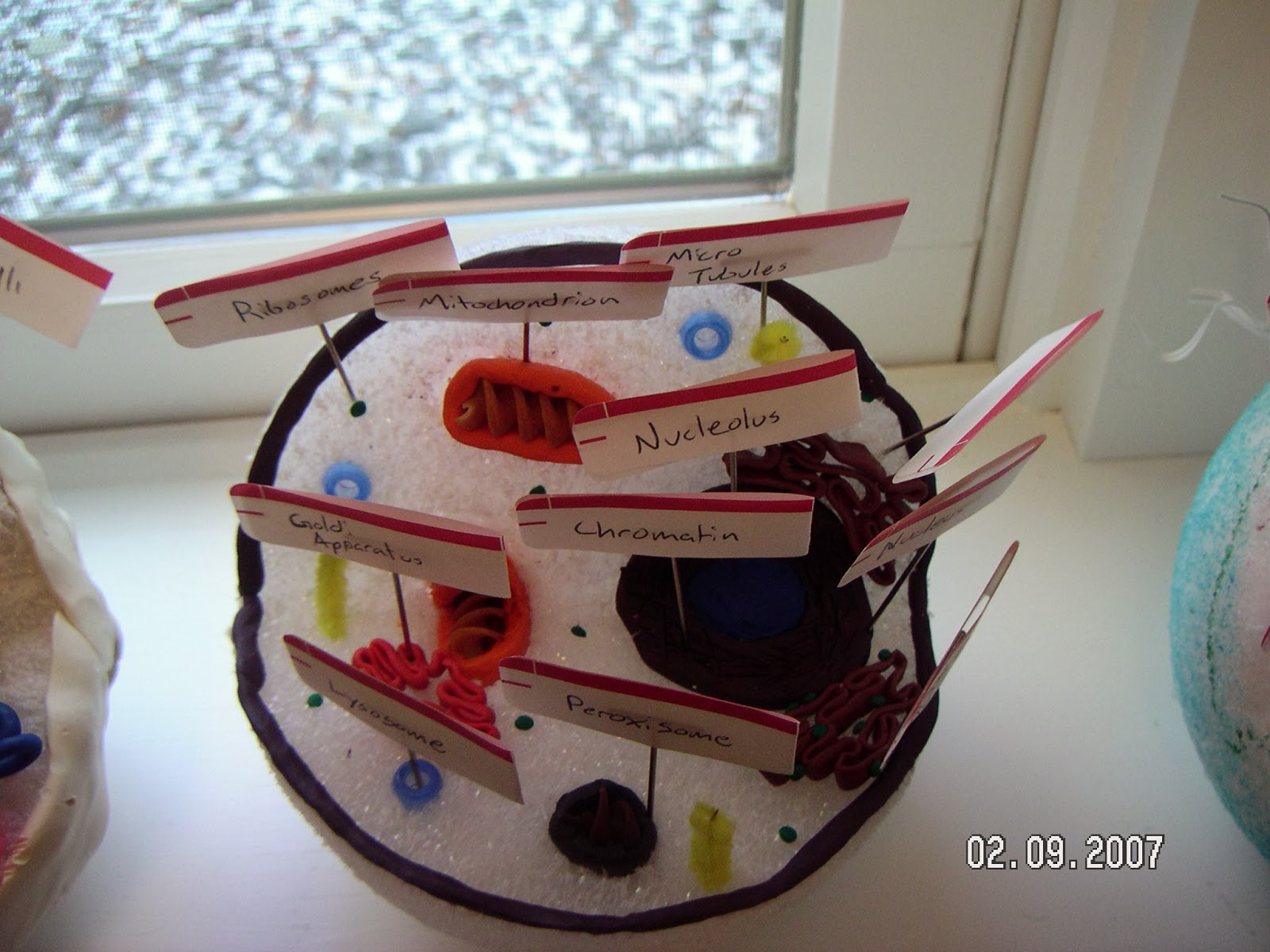 3d Plant Cell Project Materials Here is a video of a 3d cell