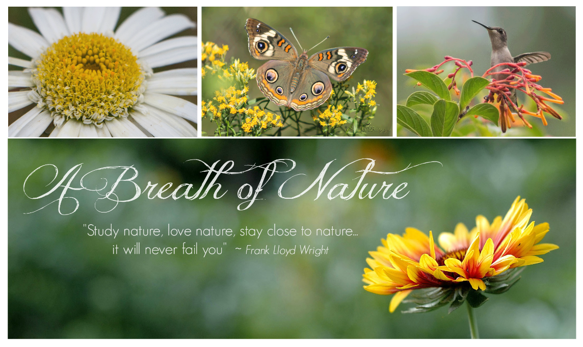 A Breath of Nature