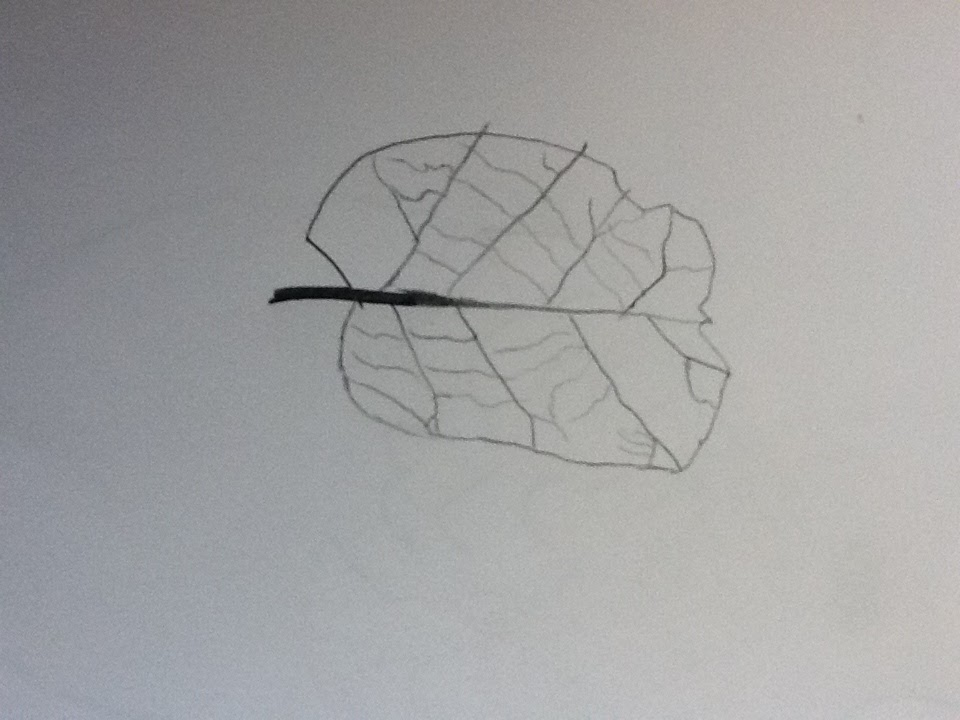 Contour Line Drawing With Wire : Picasso s swag art contour lines