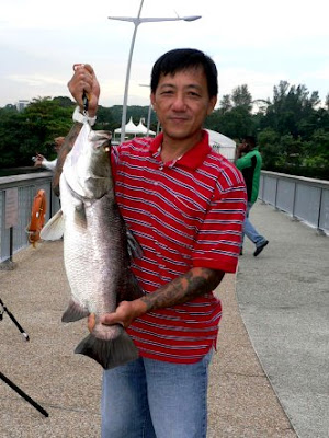 Barramundi also know as Kim Bak Lor 金目鲈 or Siakap weighing 4kg plus Caught by Ah Chuan At Woodland Jetty Fishing Hotspots was created to share with those who are interested in fishing on tips and type of fishes caught around Woodland Jetty Fishing Hotspots.