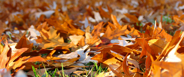 Leaves on the Ground by byrdiegyrl on flickr via CC by 2