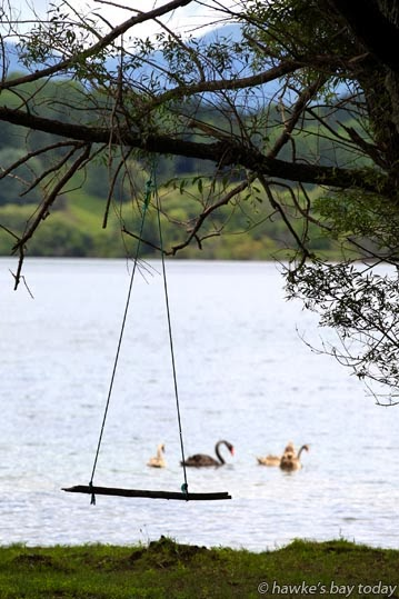 Improvised fun - tree swing at Lake Tutira photograph