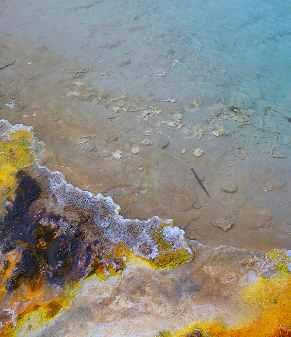 Bones in Geyser Basin, Yellowstone