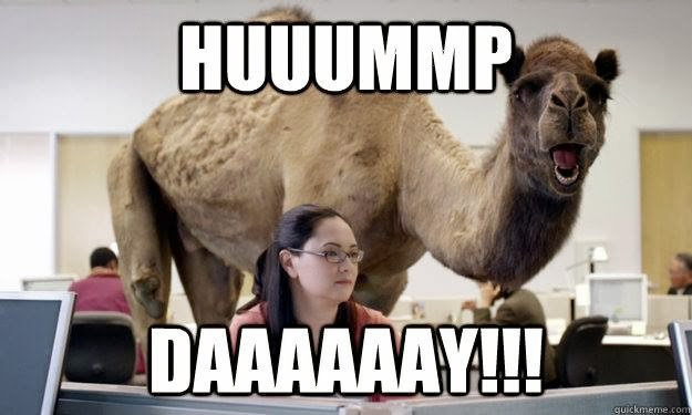 hump day just kicking it as happy as a camel on humpday