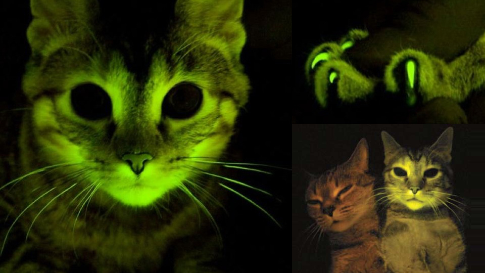 kucing glow dalam gelap