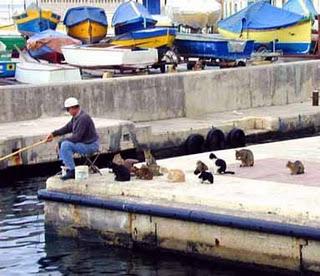 Gatos esperam por pescaria