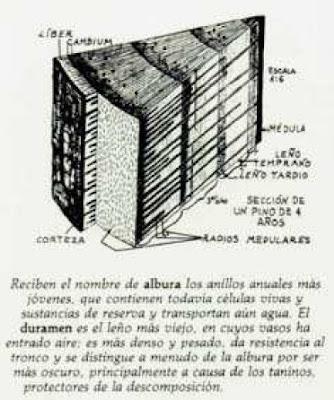 el tronco de los arboles se compone de diversas áreas