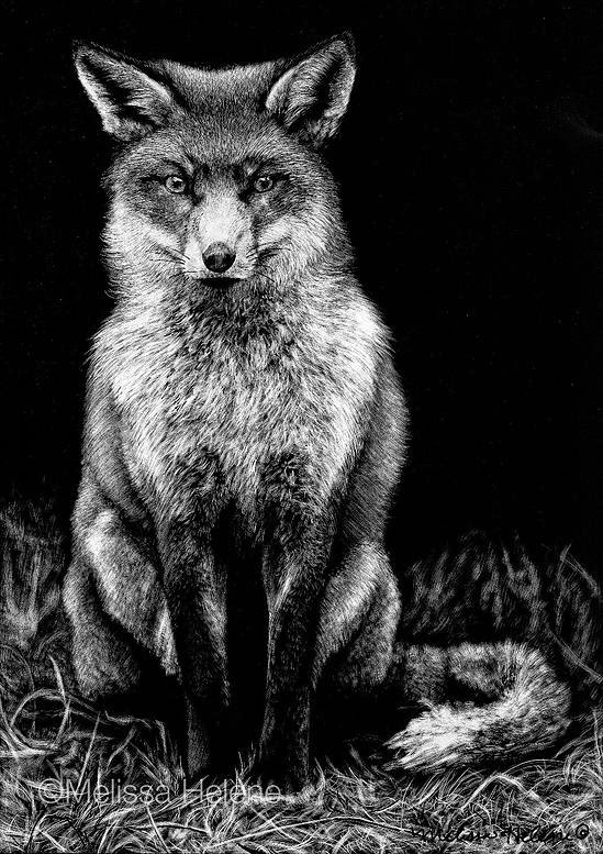 17-Fox-Melissa-Helene-Amazing-Expressions-in-Scratchboard-Animal-Portraits-www-designstack-co