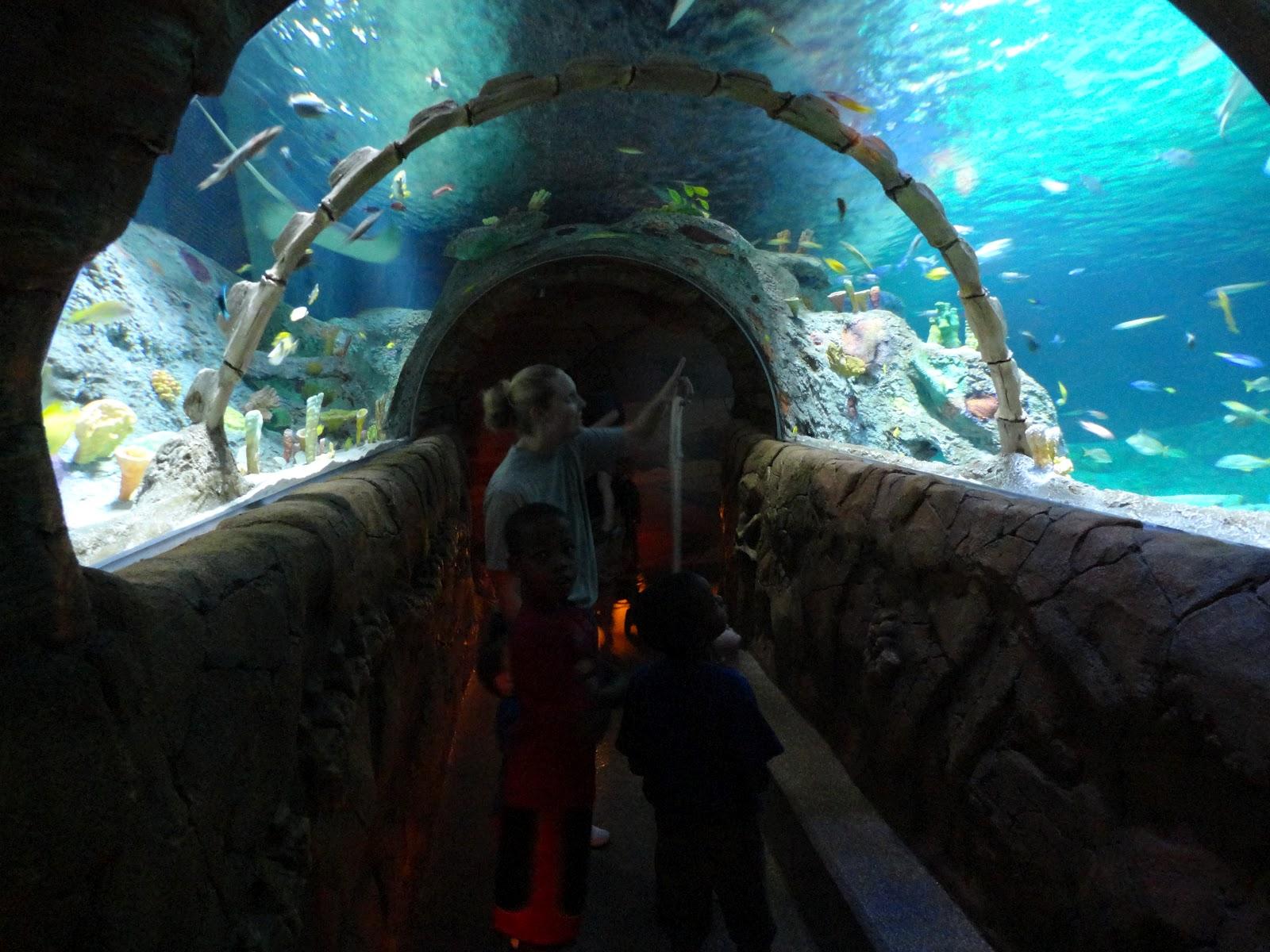 The Famn Damily Kansas City Aquarium