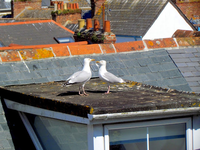 sea gulls having a chat