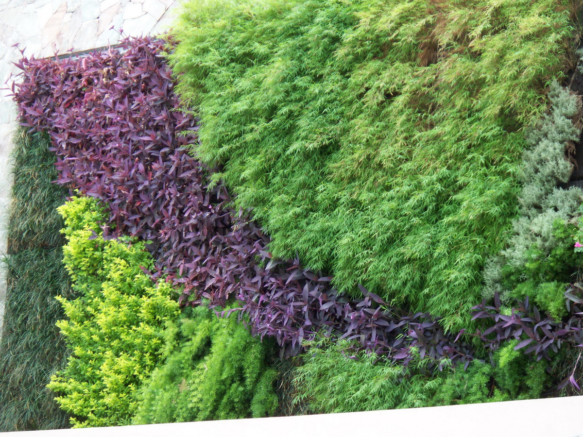Jardines verticales techos verdes for Jardines verdes verticales