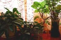 Le piante che riducono l'inquinamento