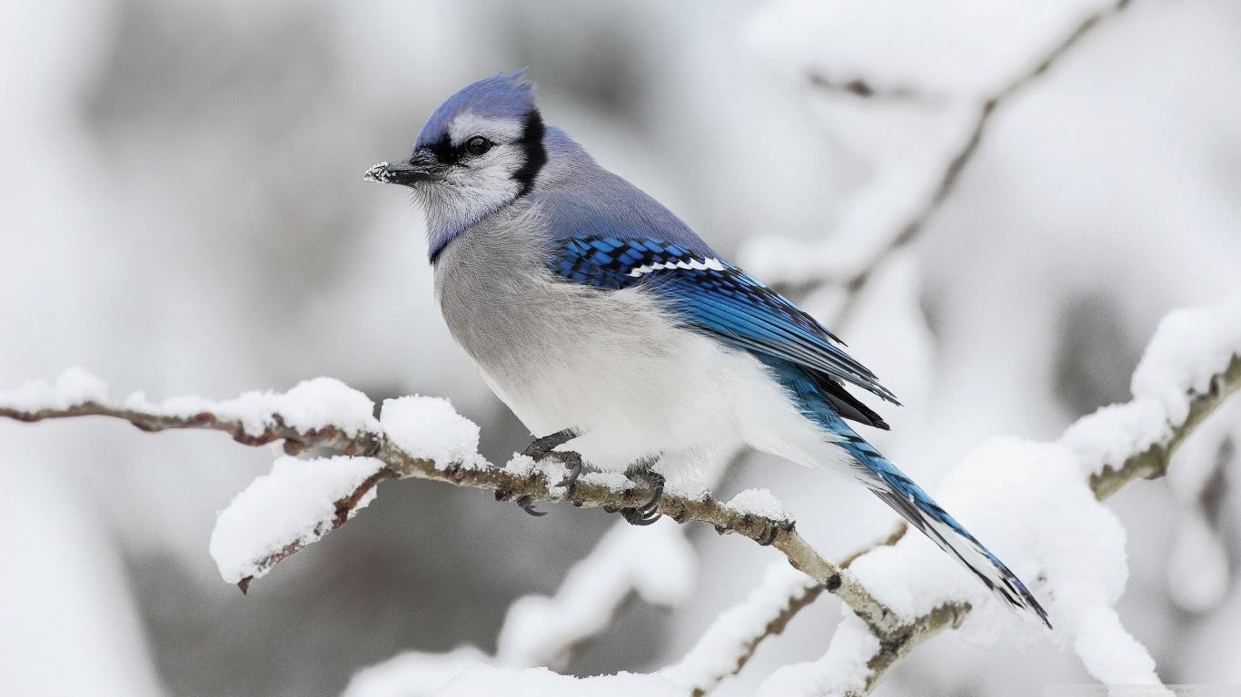 Pictures of Truly Adorable Animals in Snow