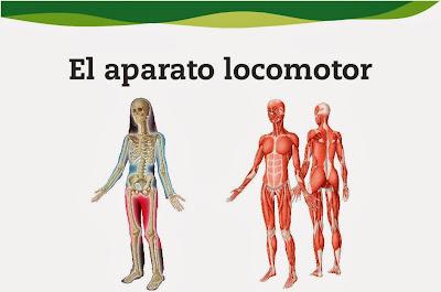 http://www.e-vocacion.es/files/html/143315/recursos/la/U03/pages/recursos/143315_P35_1.html