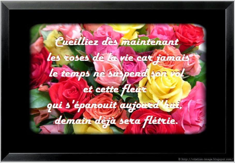 Mgnifique citation fleur en image
